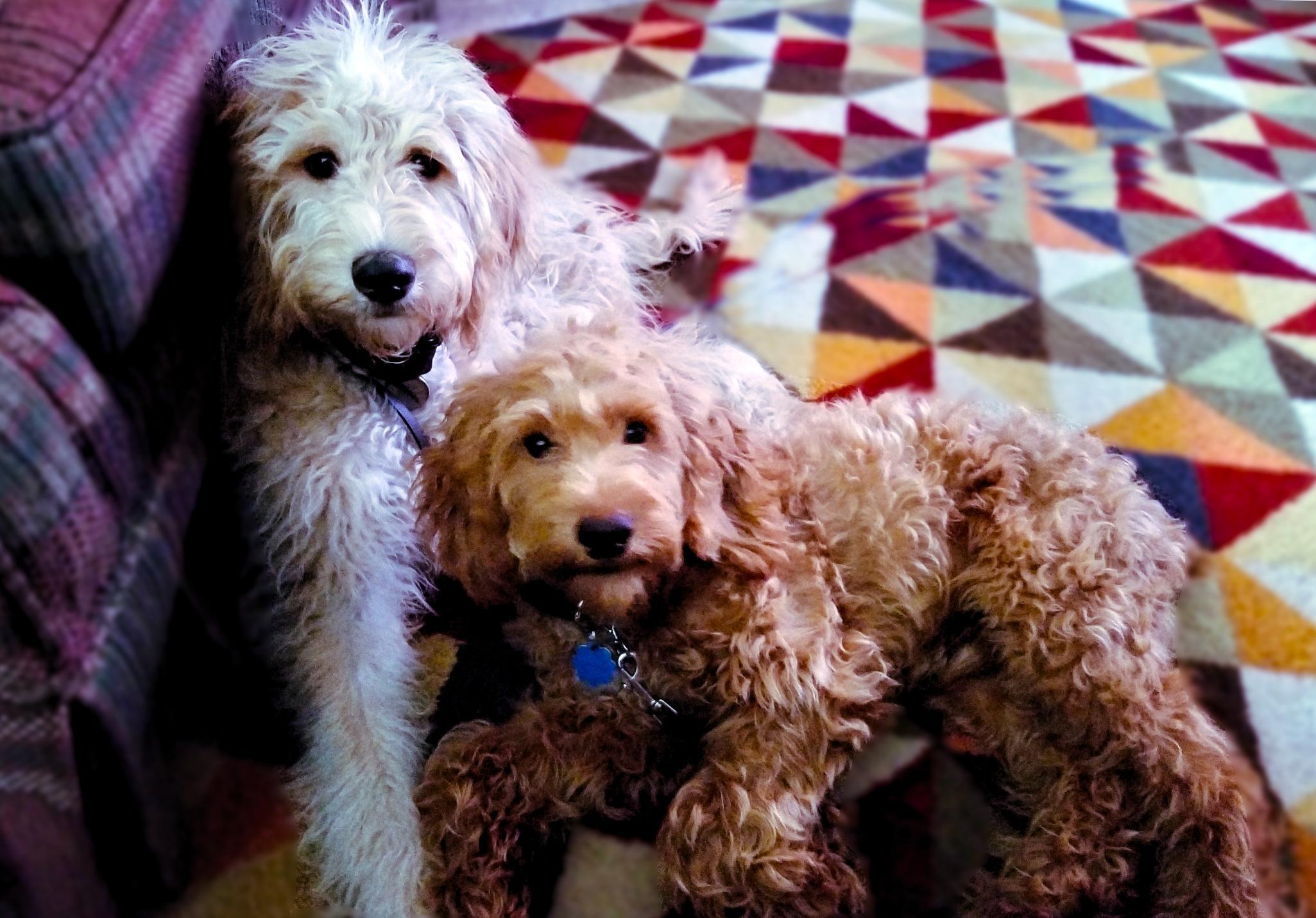 Dog Training Wheaton Il