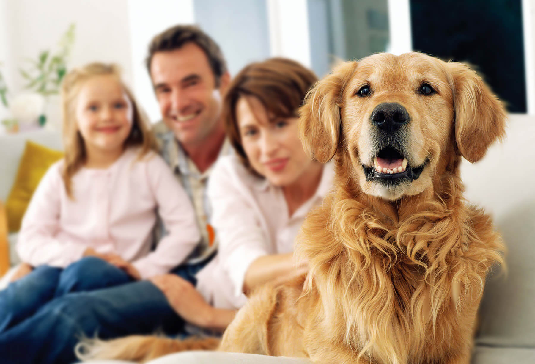 Dog Quotes Perfect Manners Dog Training A Naperville Il Dog