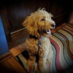 Alfie In Pixio
