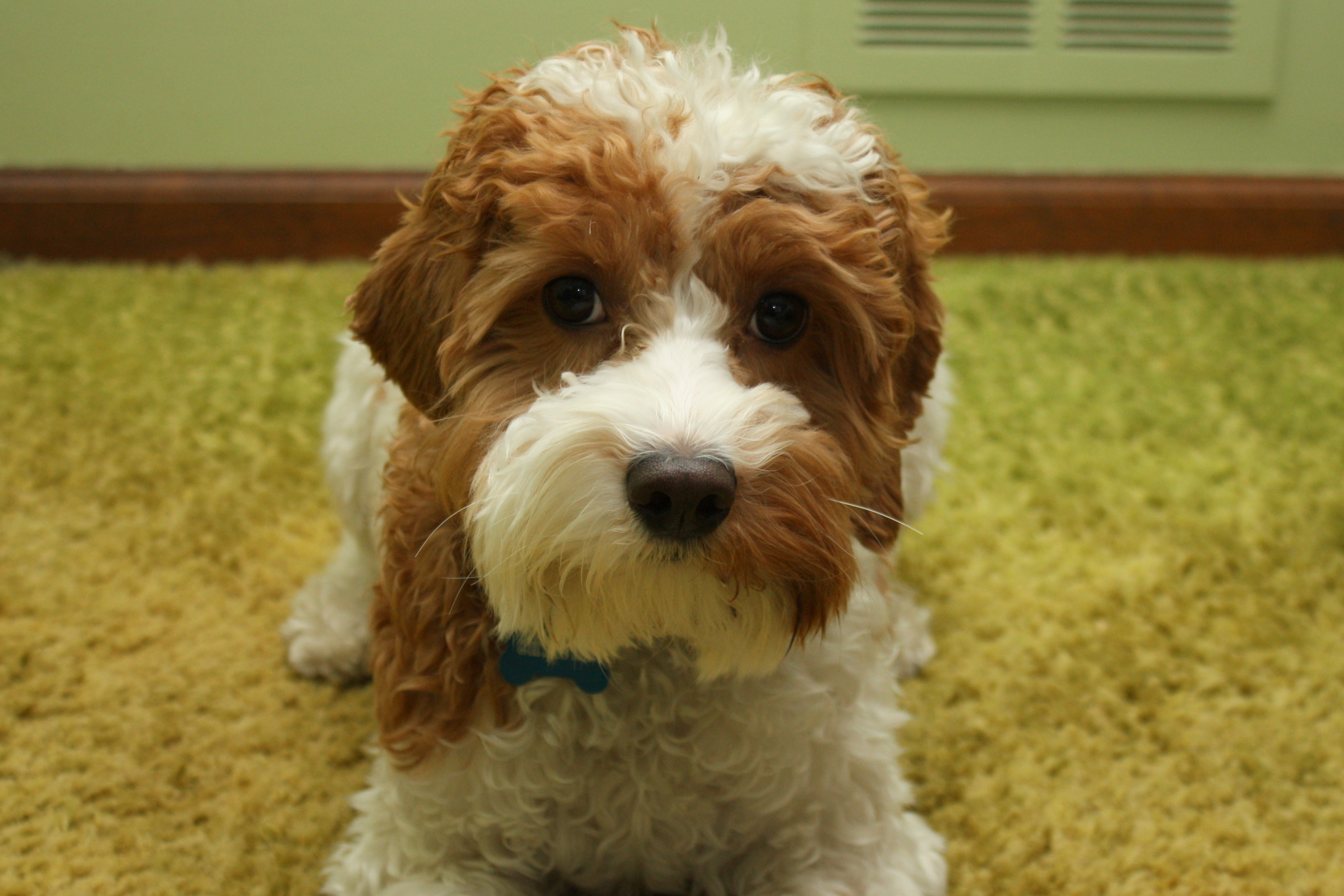 Perfect Manners Dog Training Naperville Il